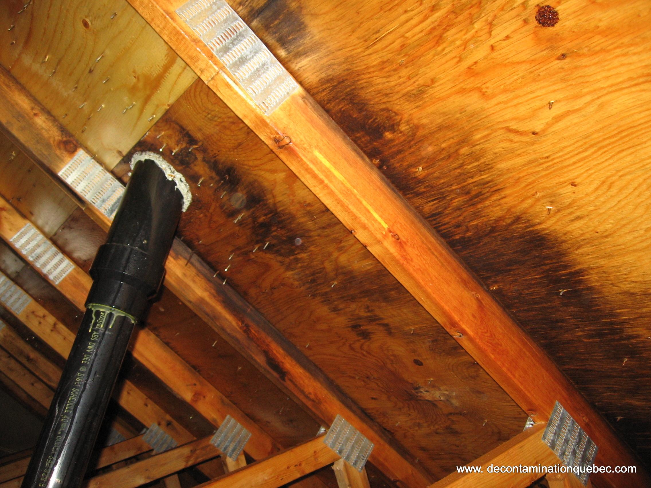 Moisissures d contamination qu bec inc for Condensation dans une maison